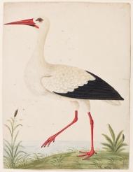 birds-90004