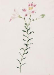 Botanical-87335-3