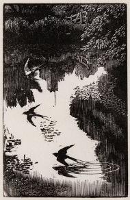 Tunnicliffe-Swallow