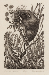 woodcock-86998