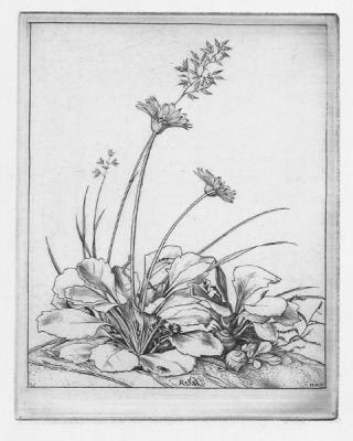 austin-daisies-22