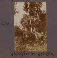 p-39-c