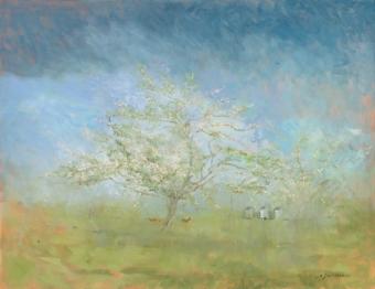 1-apple-tree-in-blosson-felbrigg-hall-orchard