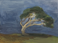 9-wind-blasted-sycamore-at-murlough-bay