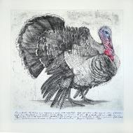 Franklin's-Turkey
