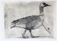 Goose-etching