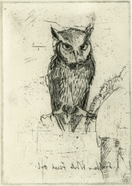 Southern-White-Faced-Owl
