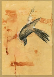 Sparrowhawk-(S)
