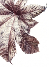 120820141314,-Ricinus-communis,-Watercolour-on-paper,-76-x-56cm