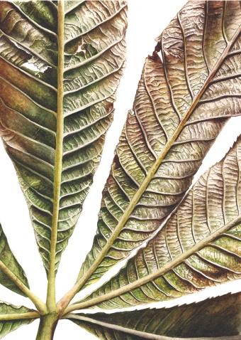 121120151127,-Aesculus-hippocastanum,-Watercolour-on-paper,-13-x-19-cm