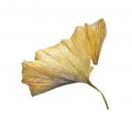 250220152005,-Ginkgo-biloba,-Watercolour-on-paper,-30-x-30cm2
