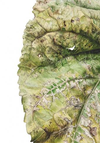 300920151946,-Populus-x-Canadensis,-Watercolour-on-paper,-120-x-90-cm