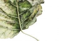 041020151159,-Populus-x-Canadensis,-Watercolour-on-paper,-90-x-120-cm