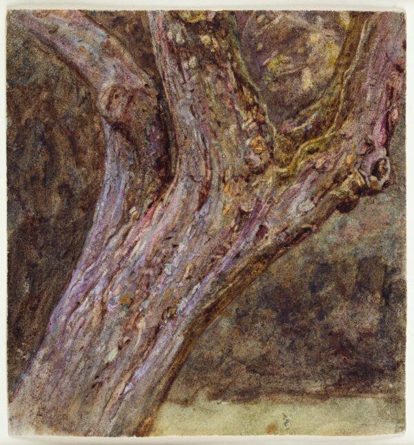 ALLINGHAM Helen R.W.S. (1848-1926) - Study of a tree's trunk.