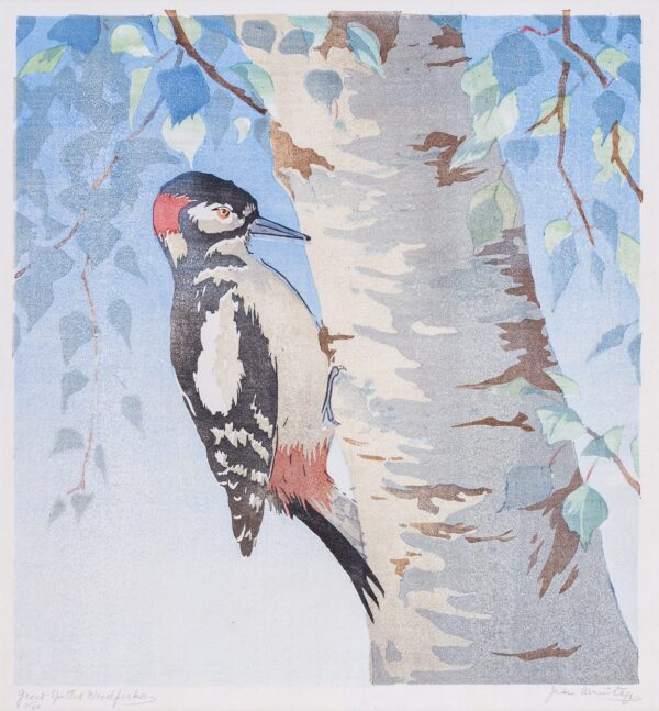 ARMITAGE Jean (1895-1988) - 'Great-Spotted Woodpecker'.