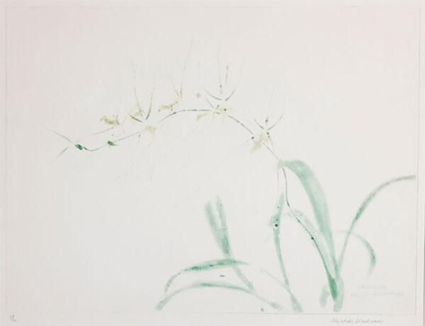BLACKADDER Dame Elizabeth R.A. R.S.A. (b.1931) - 'Orchidaceae'.
