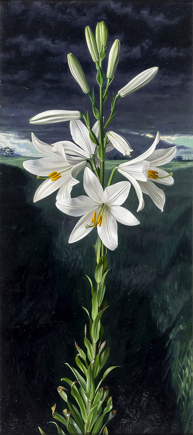 BOOTH Raymond (1929-2015) - 'Madonna Lily and Storm'.