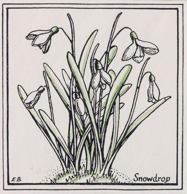 BUTCHER Enid Constance (1902-1991) - Snowdrop.