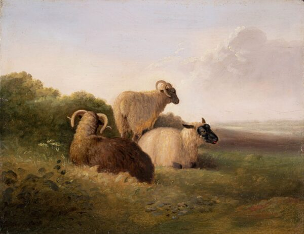COOPER Abraham R.A. (1787-1868) (Circle of) - Study of Sheep.
