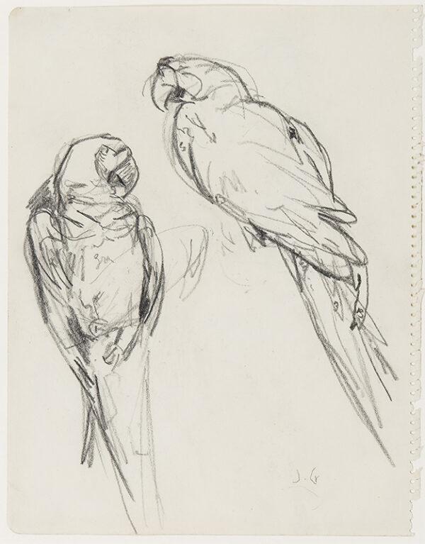 CRAWHALL Joseph (1861-1913) - Parrots.