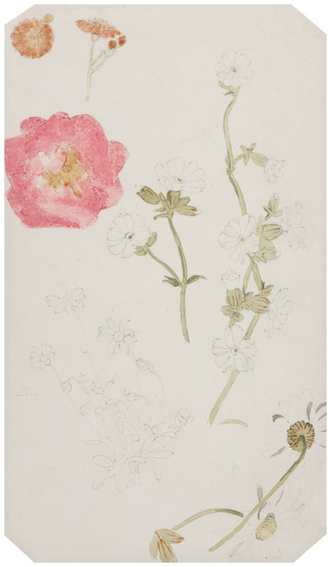 CRISTALL Joshua P.O.W.S. (1767-1847) - 'June' flowers.