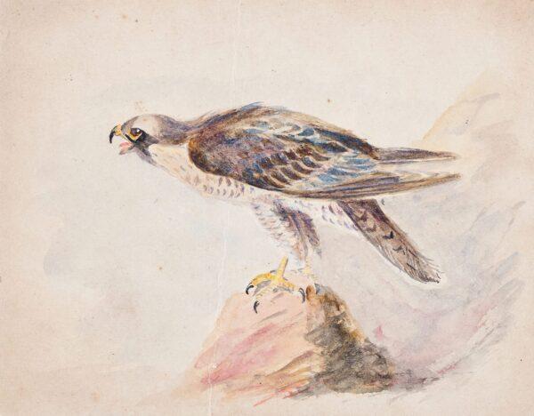 CUMBERLAND George (1754-1848) - An eagle.