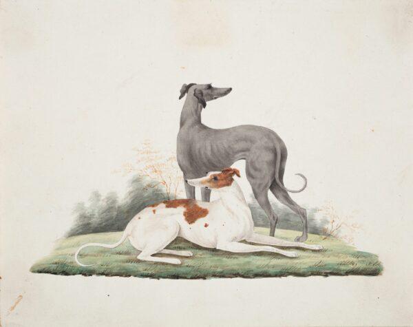 CUMBERLAND George (1754-1848) - A pair of lurchers.