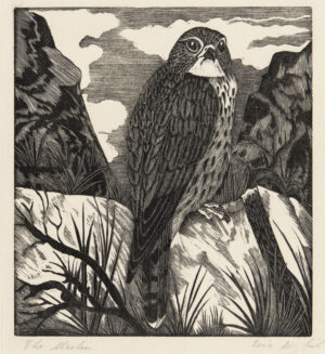 DAGLISH Eric Fitch (1892-1966) - 'The Merlin'.