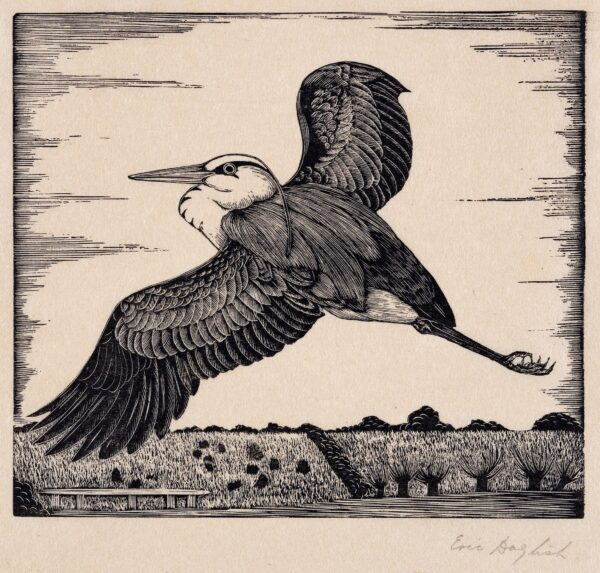 DAGLISH Eric Fitch (1892-1966) - Heron in flight.