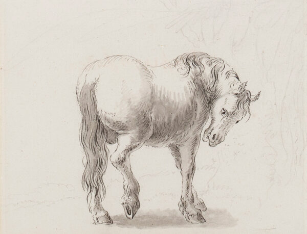 DEVIS Anthony (1729-1816) - Study of a horse.