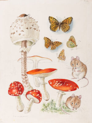 1. Mildred Eldridge R.W.S. (1909-1991) - 'Fungus, Fritillary and Young Field Mouse'.