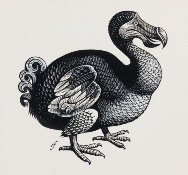 FRASER Eric (1902-1983) - The Dodo.