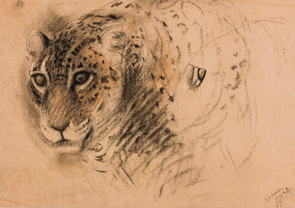 GUETTANT Gustave (1873-1934) - Study of a leopard.