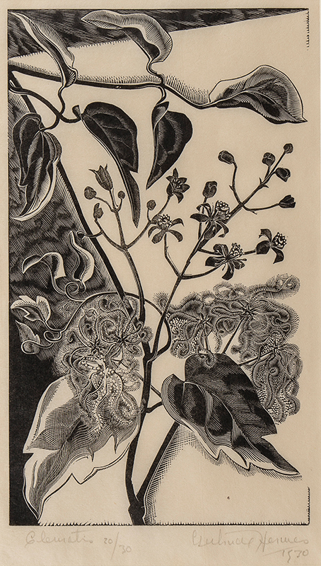 HERMES Gertrude R.A. (1901-1983) - 'Clematis'.