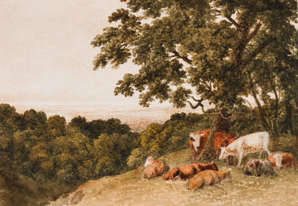 HILLS Robert O.W.S. (1769-1844) - Cattle in the shade.