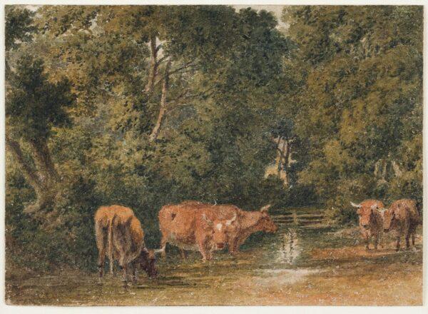 HILLS Robert O.W.S (1769-1844) - Cattle watering.