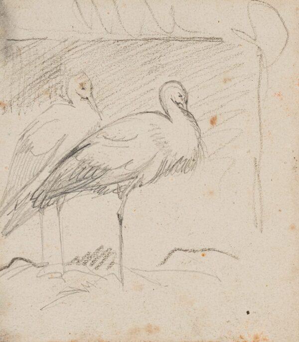 LANDSEER Sir Edwin R.A. (1802-1873) - Studies of Cranes.