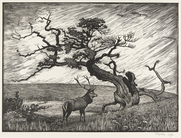 LEE Sydney R.A. S.W.E. (1866-1949) - 'The Oak and the Stag' (RM.