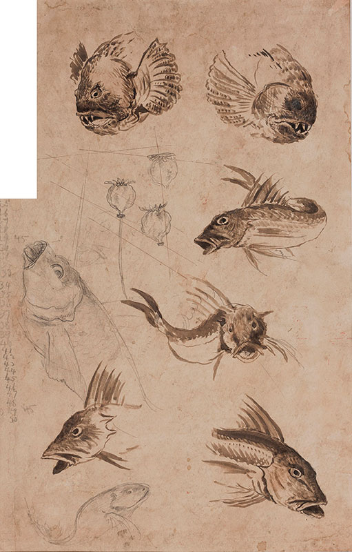 MARTIN Edwin (1860-1915) - Studies of Cat Fish – for the Martinware 'Canal-bank' period.