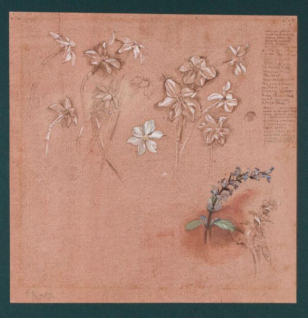 MONNINGTON Sir Thomas P.R.A. (1902-1976) - Plant studies.