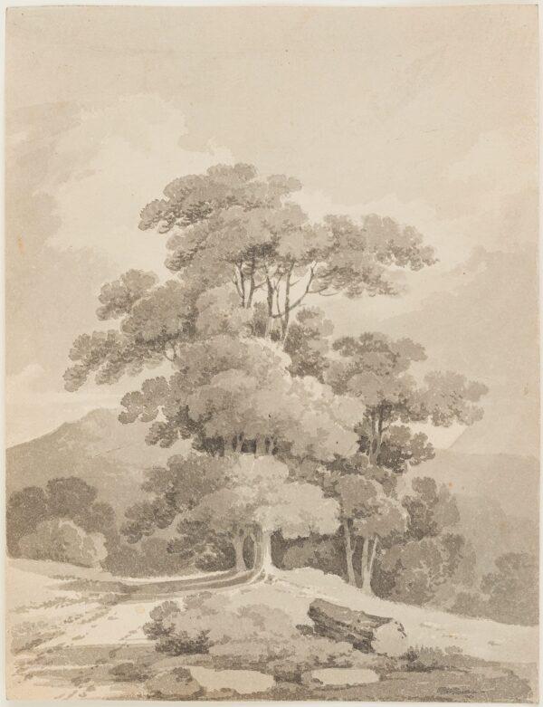 MUNN Paul Sandby (1773-1845) - A Stand of trees.