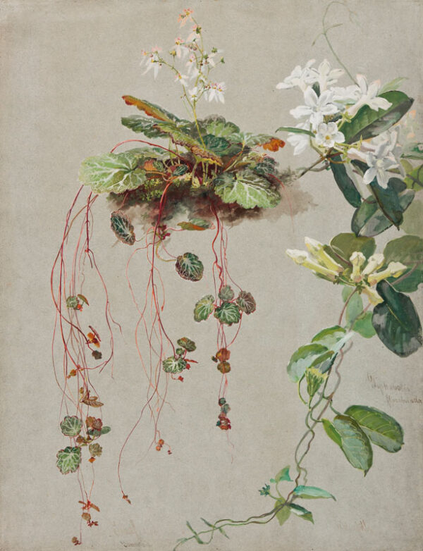 MUSSILL William (1828-1906) - Tree Orchids.