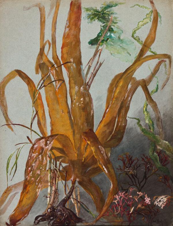 MUSSILL William (1828-1906) - Trunk study.