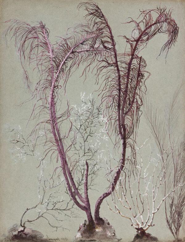 MUSSILL William (1828-1906) - Plant Study.