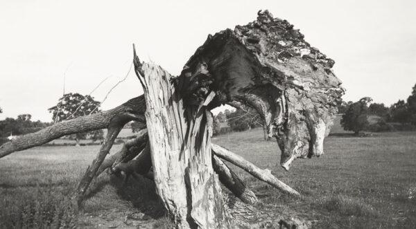 Paul NASH - A Private World, 25 Photographs.