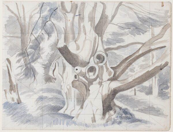 NASH John R.A. (1893-1977) - Study of a felled tree.