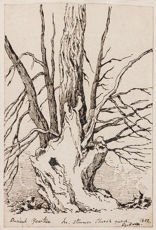 NIBBS Richard Henry (1816-1893) - 'Ancient Yew-tree.