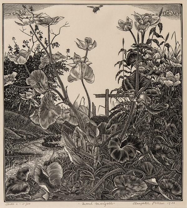 PELLEW Claughton (1890-1966) - 'Marsh Marigolds'.