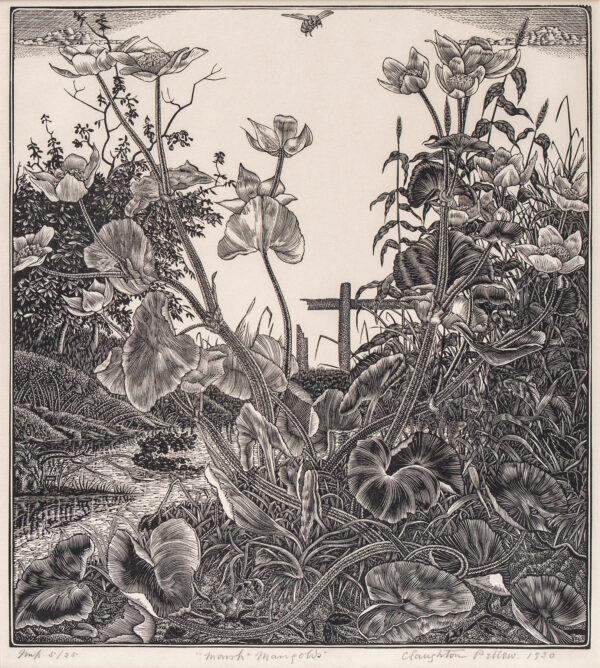 PELLEW Claughton (1890-1966) - 'Marsh Marigolds' (AS 53) Wood engraving.