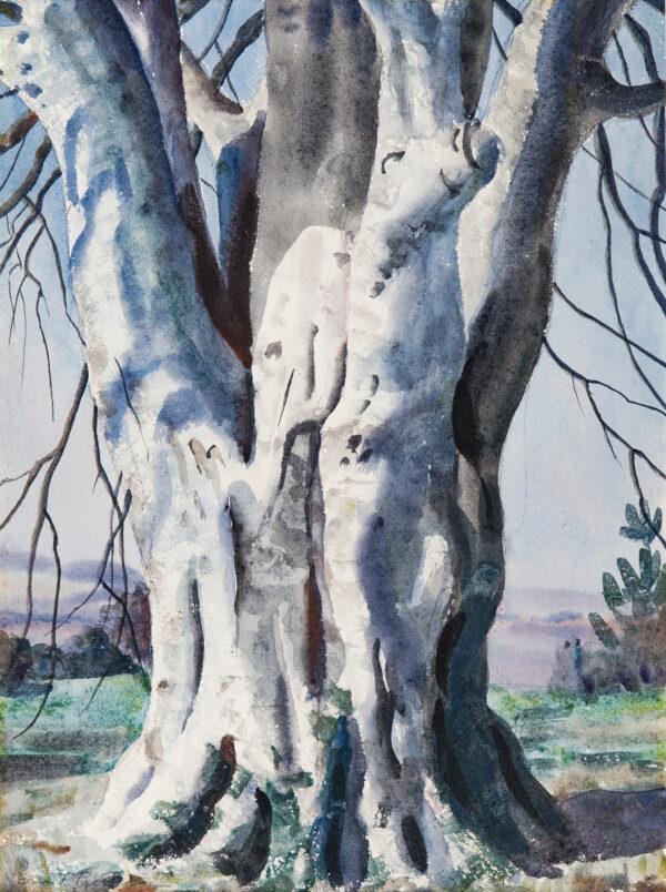 PROCTER Ernest A.R.A. (1886-1935) - 'The Beech Tree'.
